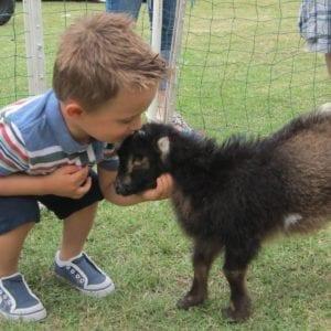 Petting Zoo/ Ponies