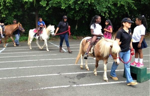 Pony Rides scaled